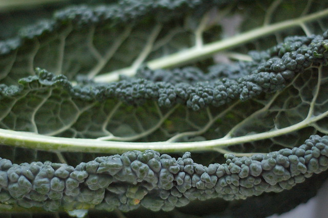 Dinosaur kale by Eve Fox, the Garden of Eating, copyright 2015