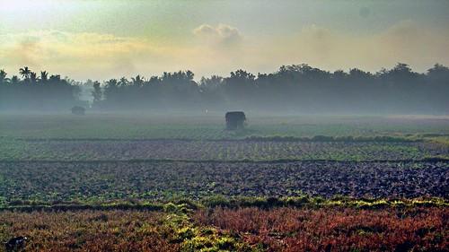 Morning Haze Over Farmland