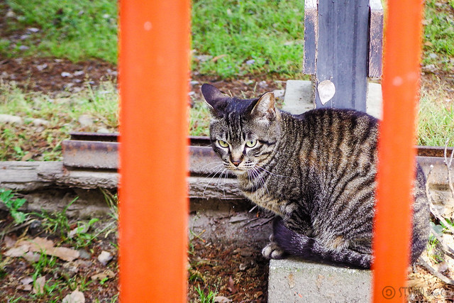 Today's Cat@2016-05-03