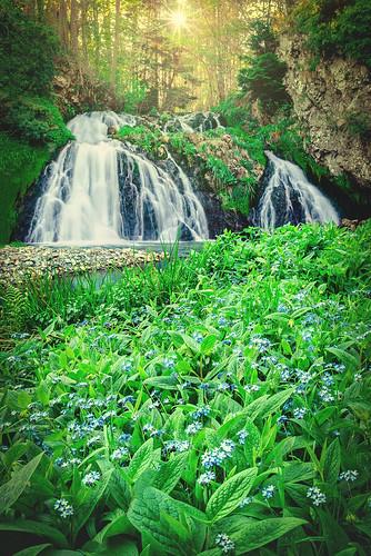 sunset sun bluebells forest river landscape scotland waterfall highlands nikon stream long exposure aberdeenshire scottish falls iain 20mm dee less starburst brooks sunstar d610 18g iainbphoto