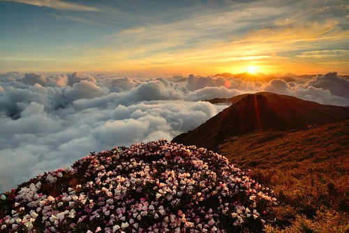 合歡杜鵑雲海