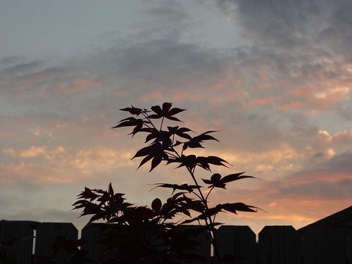 sunset mobile landscape al japanesemaple 2013