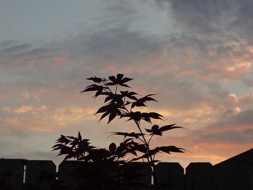 sunset mobile landscape al japanesemaple 2013