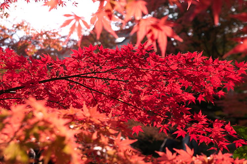 【写真】2012 紅葉 : 長岡天満宮/2020-10-09/IMGP6574