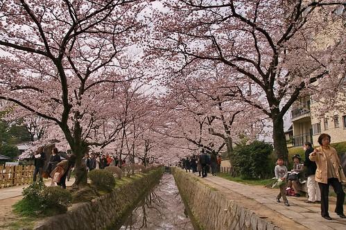 【写真】2013 桜 : 哲学の道/2018-12-24/IMGP9251