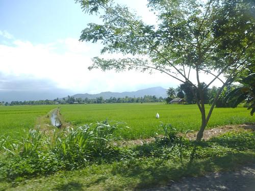 Sulawesi13-Pare Pare-Palopo (27)