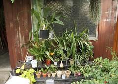 Orchideenecke