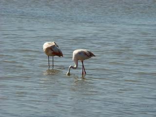 092 flamingo's