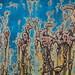 Rust Bubbles by ebergcanada