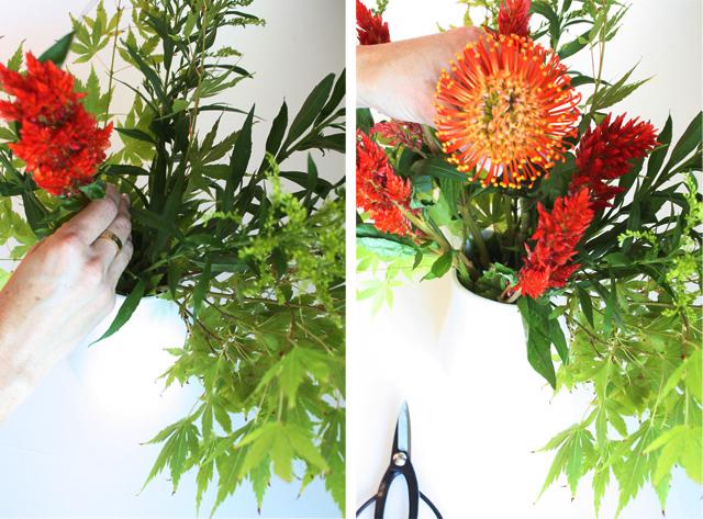 protea cockscomb