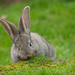 Bunny by Sandien