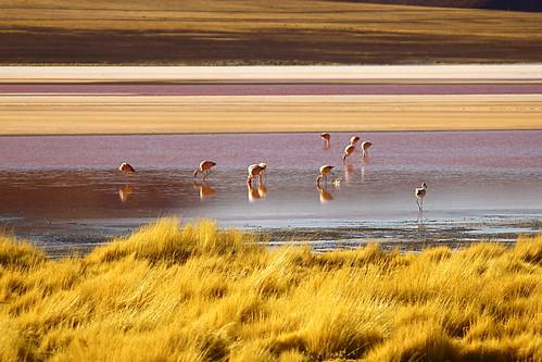 travel orange brown lake color colour bird southamerica nature water yellow canon landscape view flamingo ngc bolivia andes vista picturesque salar altiplano nationalgeographic uyuni tupiza salardeuyuni clicheforu christianpetit tupizatour