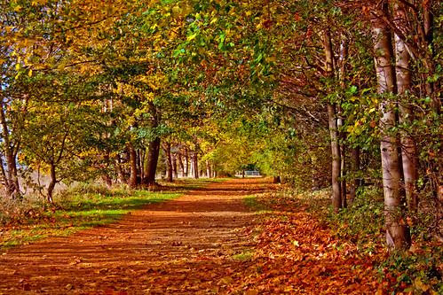 Woodland Path (Explored)