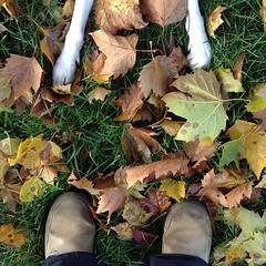 Fall feet. #grumblepup