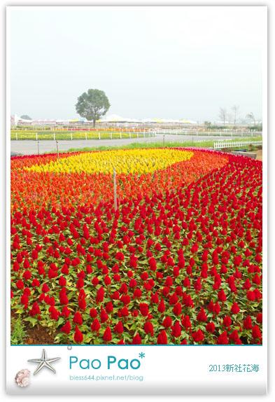 2013新社花毯節花海