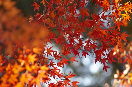 【写真】2013 紅葉 : 上御霊神社/2020-07-01/IMGP4193