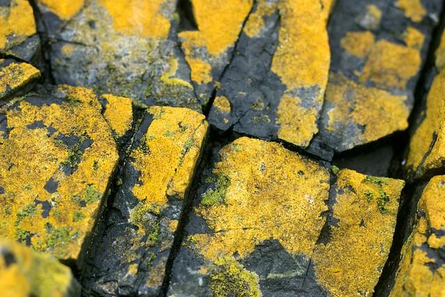 Yellow Lichen on Angular Rocks