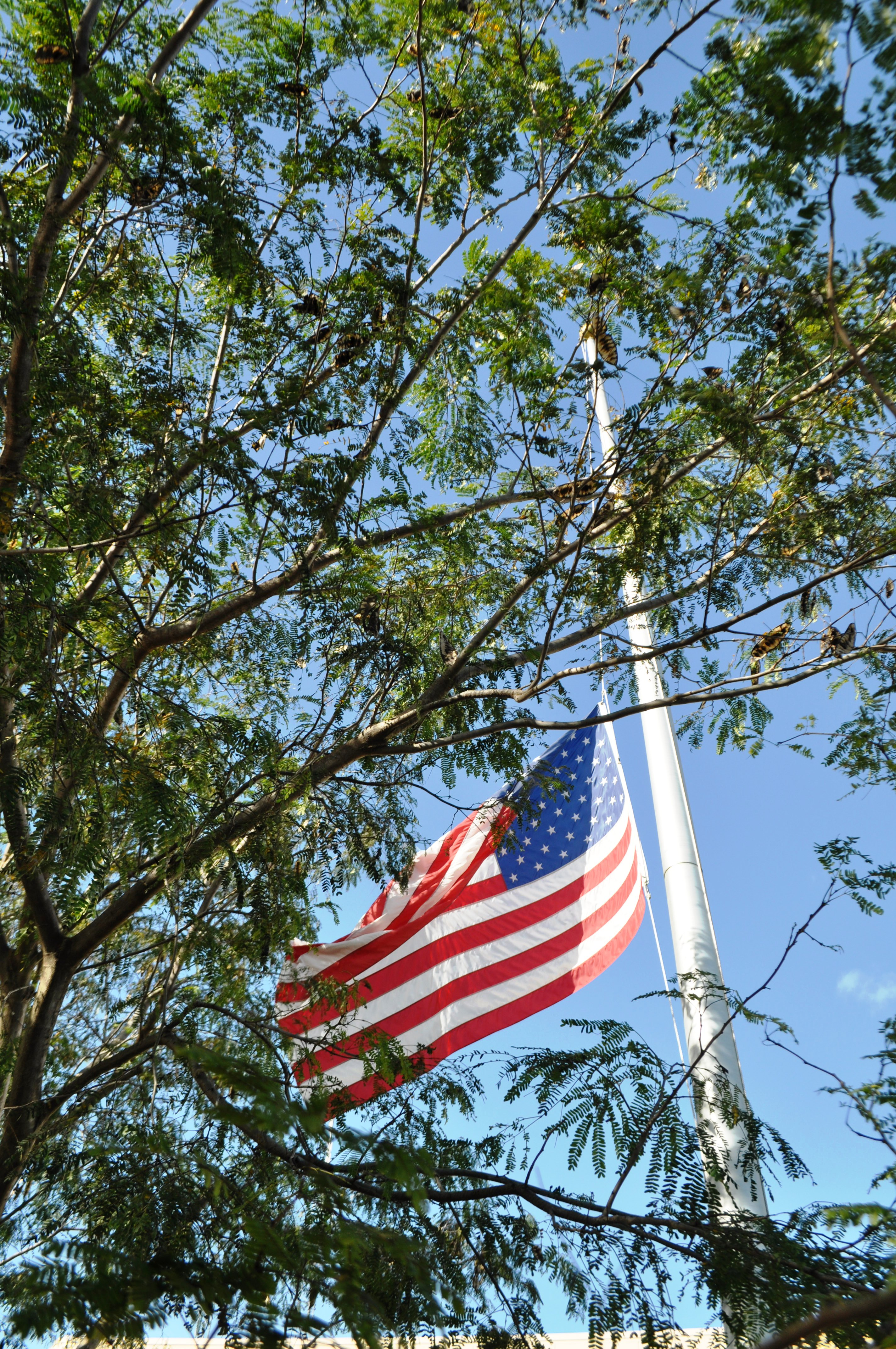 Flag at the Oasis Visitor Center at the Big Cypress Preserve in Florida was at Half-Staff Because it was Pearl Harbor Remembrance Day, Dec. 7, 2103