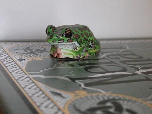 Kitan Club Frog