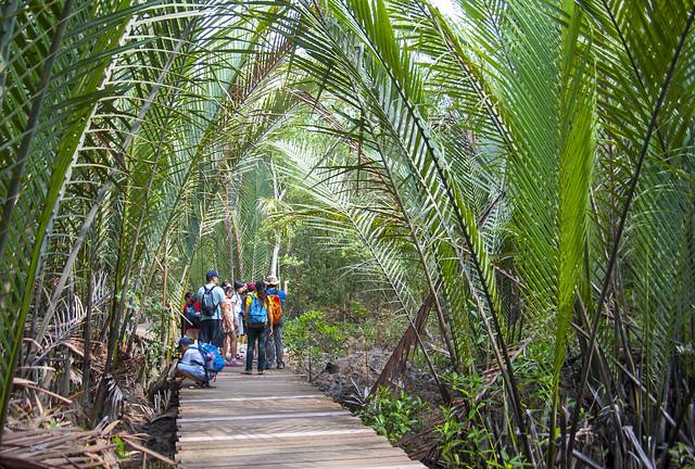 Nipah palm (Nypa fruticans)