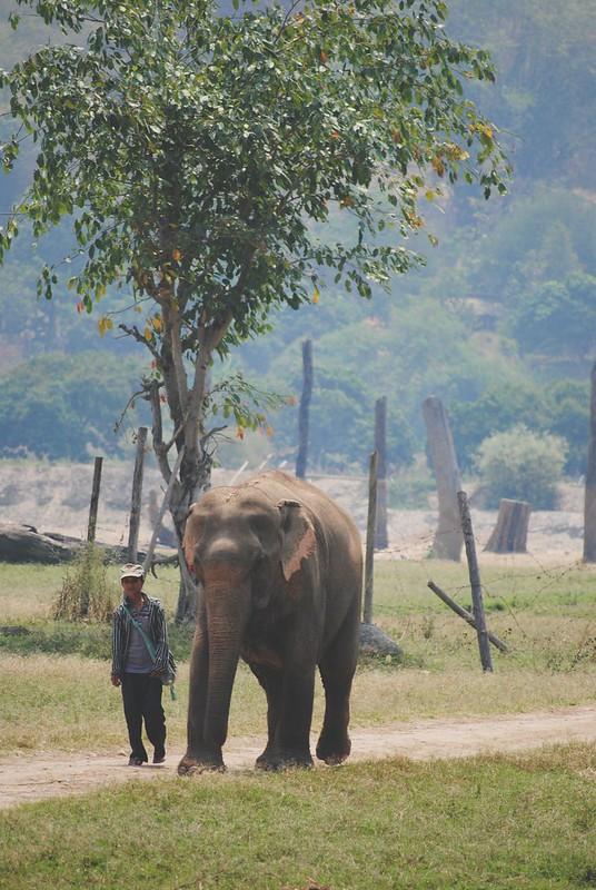 Chiang Mai, Thailand 2014