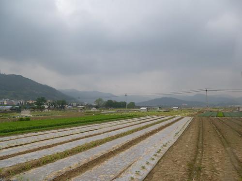 Fujian-Xiapu-Champs (5)