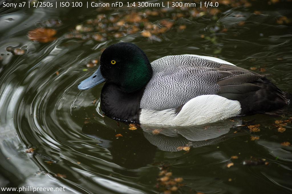 Canon nFD 300mm 1:4 L