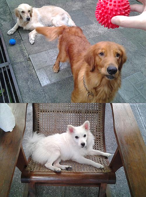 DelaCruz_Pets
