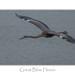 Great Blue Heron by ken.krach (kjkmep)