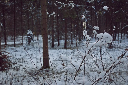 Forest   Loipersdorf