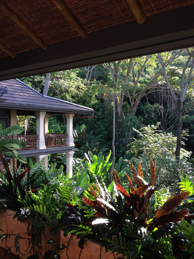 View back to bedroom terraces and rainforest