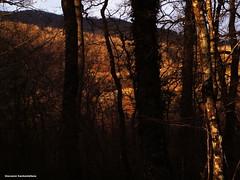 冬の森 - Il bosco d'inverno