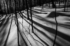 Long shadows at Macricostas