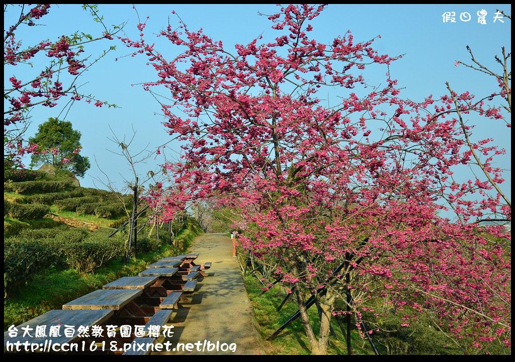 台大鳳凰自然教育園區櫻花DSC_5912