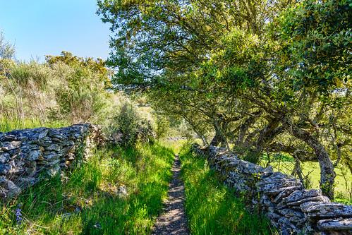 Hinojosa de Duero. Camino de la Cabrita