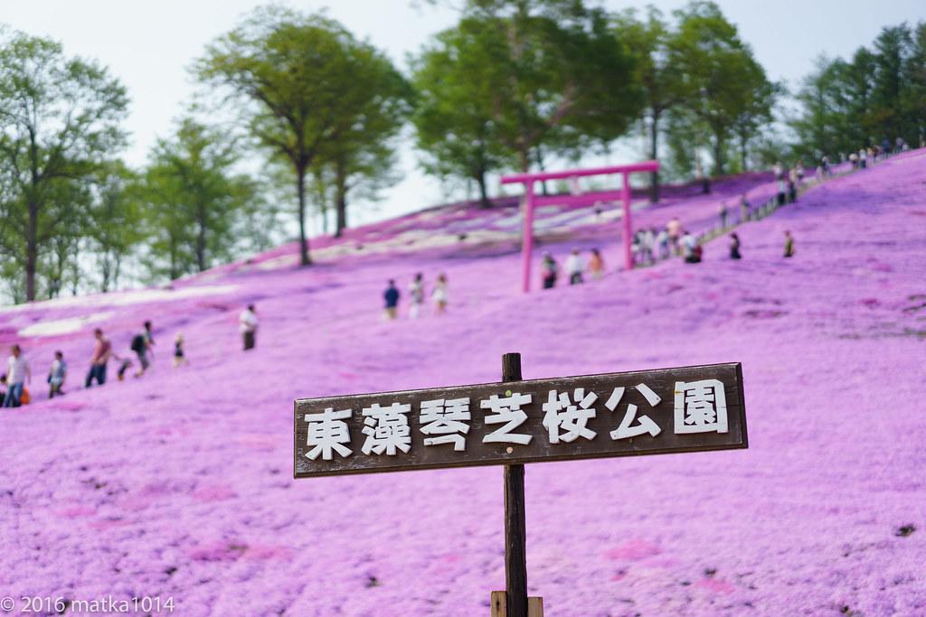 東藻琴芝桜公園-17