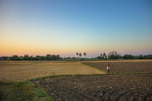 Farmer's paradise.