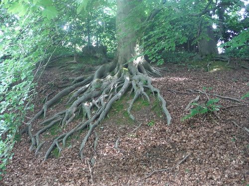 Tree Roots in Whirlowbrook Park