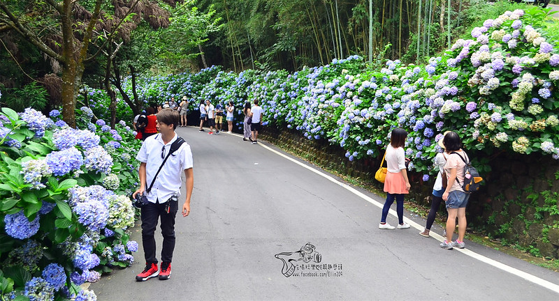 繡球花 (2)