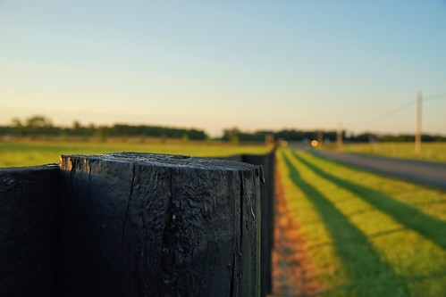 green fence goldenhour fencepost leadinglines