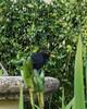 common blackbird (Turdus merula)_edited-1