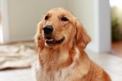 A cute Dog 4