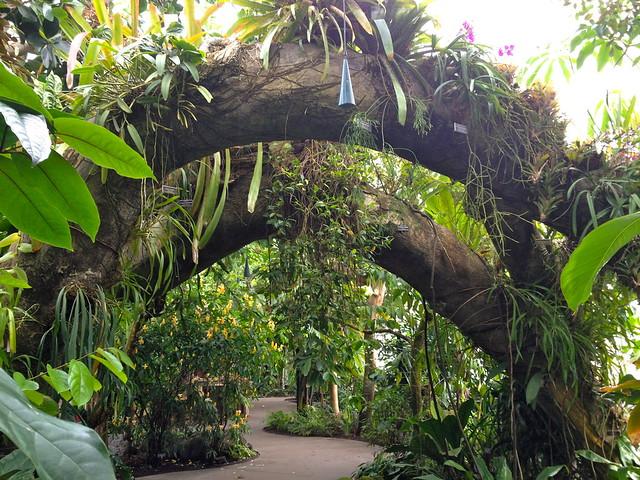 NY Botanical Gardens