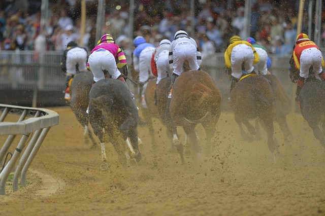 The first turn at thePreakness