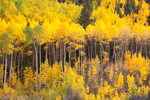 autumn usa canon colorado unitedstates roadtrip buenavista co autumncolor ef70200f4l cottonwoodpass cottonwoodpassroad 5dmkii cr306