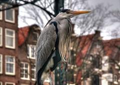 2011 01 19 Amsterdam Brouwersgracht