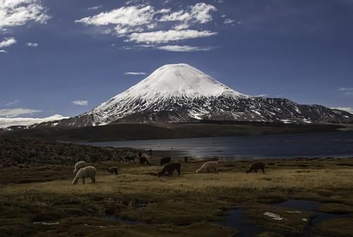 chile alpaca azul lago day cielo nubes andes d200 arica volcan parinacota lauca chungara robertocumsille pwpartlycloudy