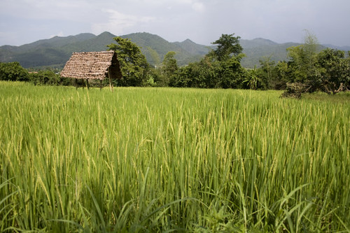 Tacomepai Organic Farm, Pai Thailand 11