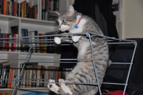 Maxi doing gymnastics on our clothes airer