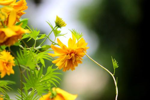 Mellow yellow morning